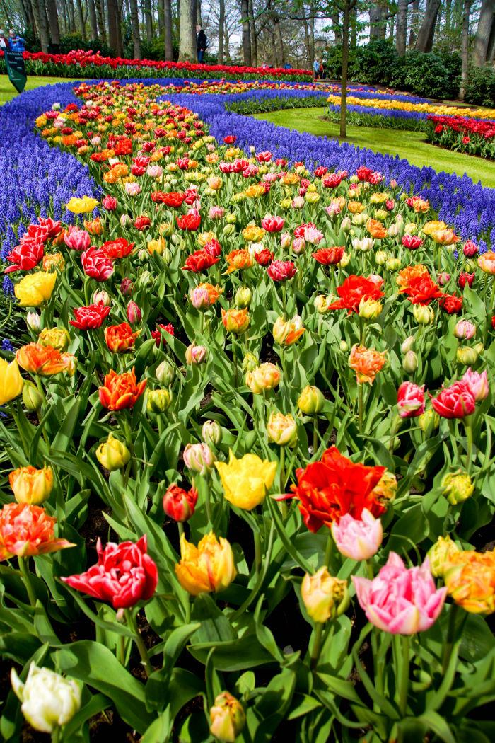 Holland im Frühling - Fluss aus Tulpen