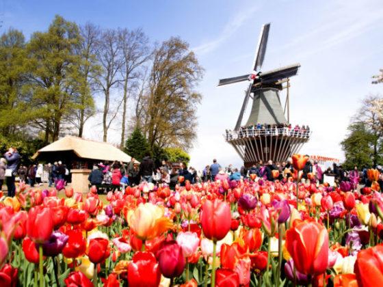 Holland im Frühling Mühle am Keukenhof