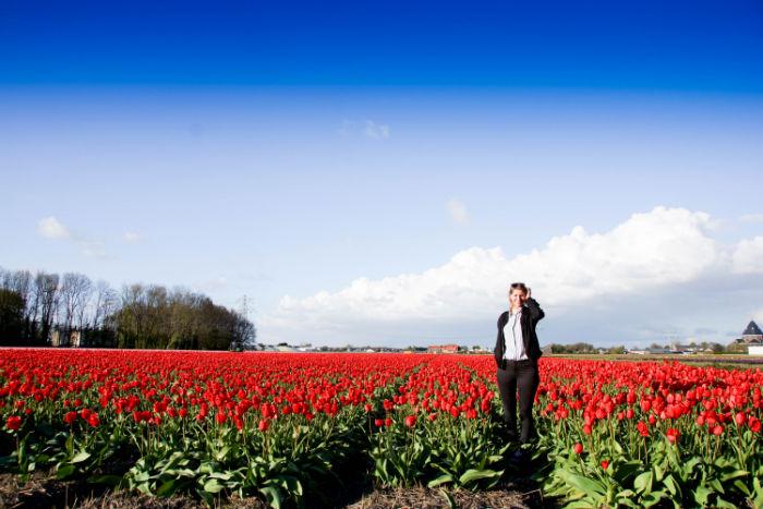 Holland im Frühling - Tulpenshow