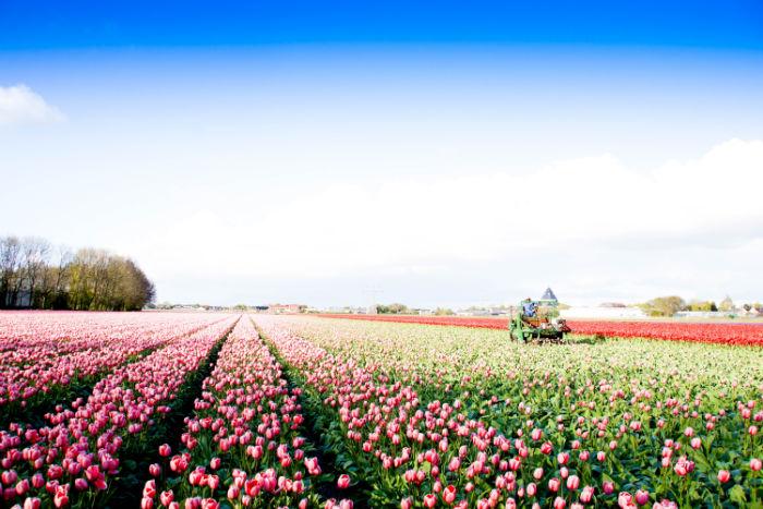 Holland im Frühling - Arbeit auf dem Feld