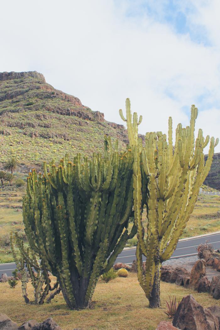 Kakteen auf La Gomera - Zauberhaft!