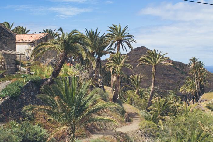 Palmhonig auf La Gomera.