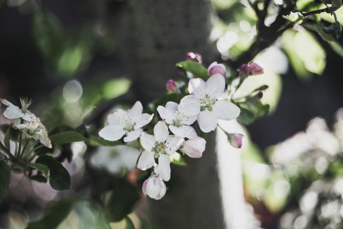 Blumenblüten in Rumänien