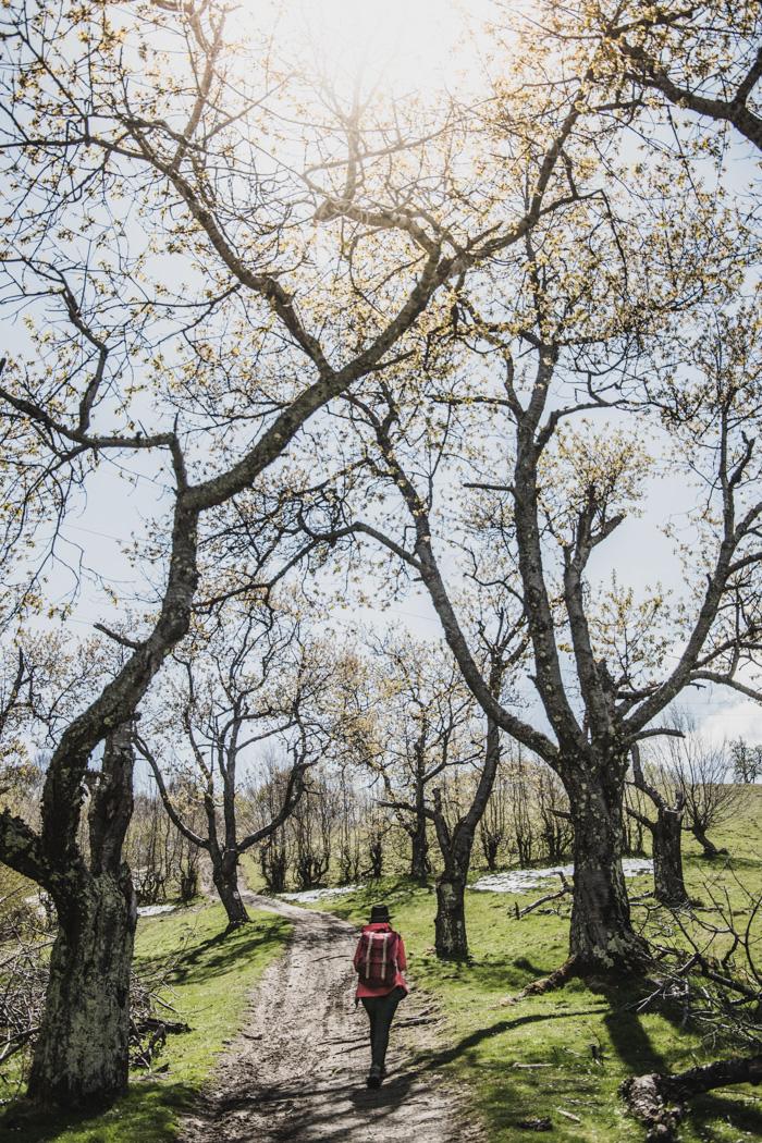 Frühling in Rumänien