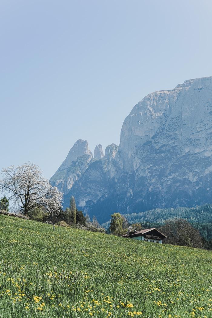 Aussicht auf die Schlern Berge