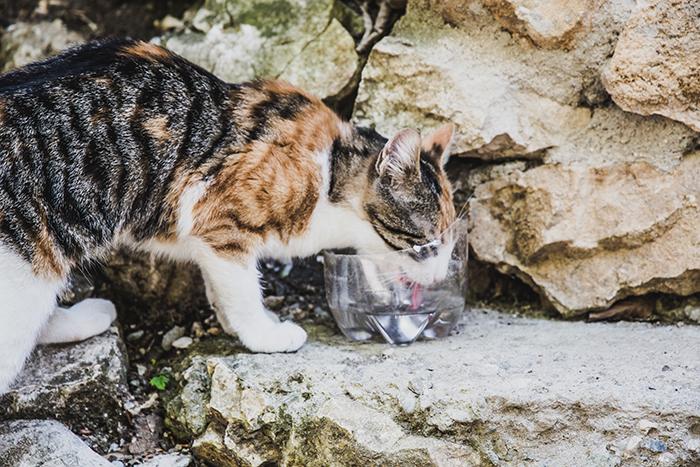 Durstige Katze