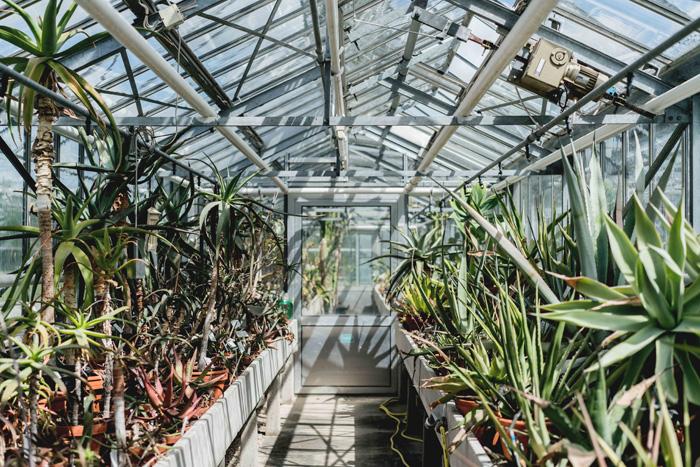 Kakteen Botanischer Garten Bayreuth