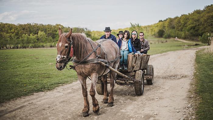 Kutschfahrt in Rumaenien