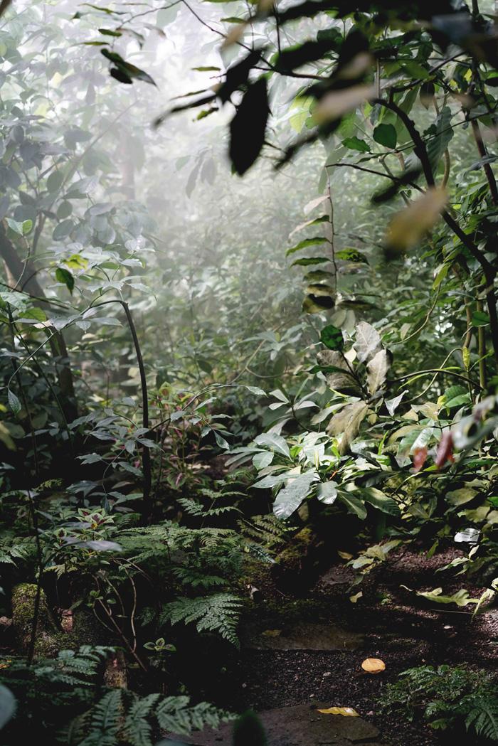 Nebelwald Botanischer Garten Bayreuth