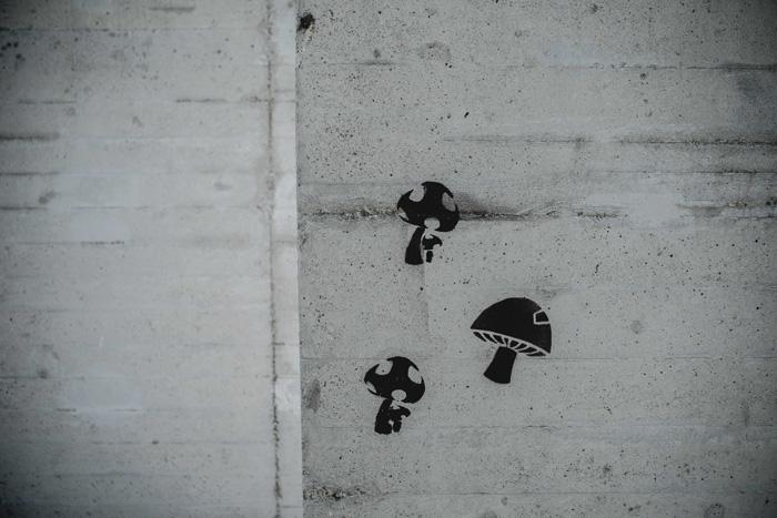 Pilze auf Wand