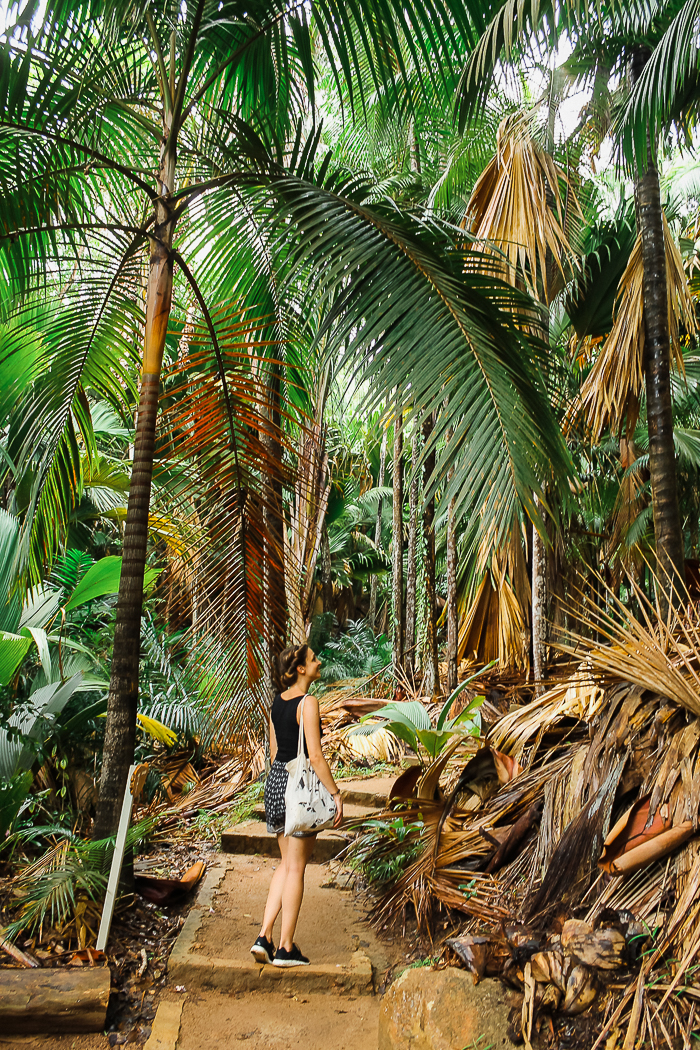 Naturpark Praslin Seychellen