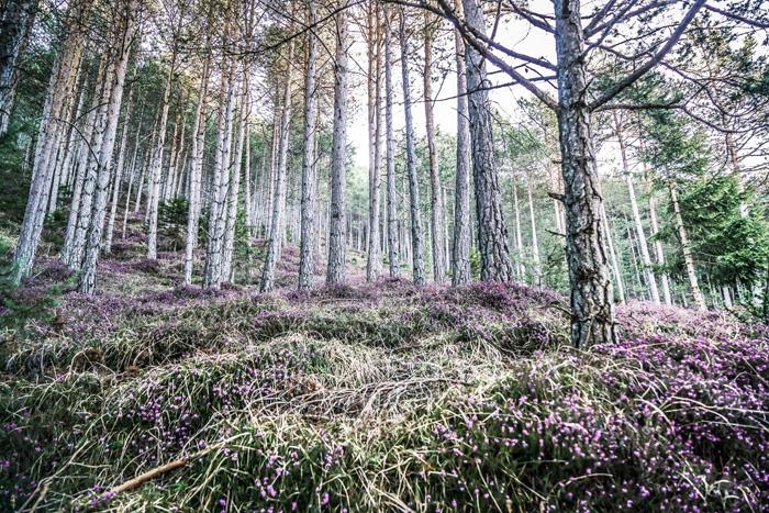 Wald im Schlerngebiet