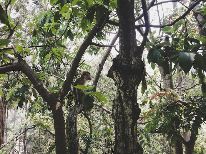 Affen Waterfalls Sri Lanka