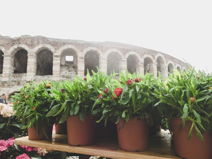 Arena Verona