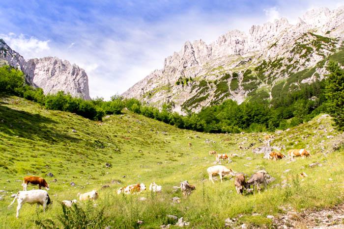 Bergsport am Wilden Kaiser Wandern Gaudeamushütte