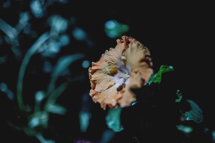 Blume im Tropenhaus