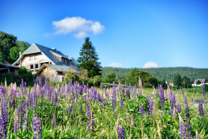 Blumen Hochschwarzwald
