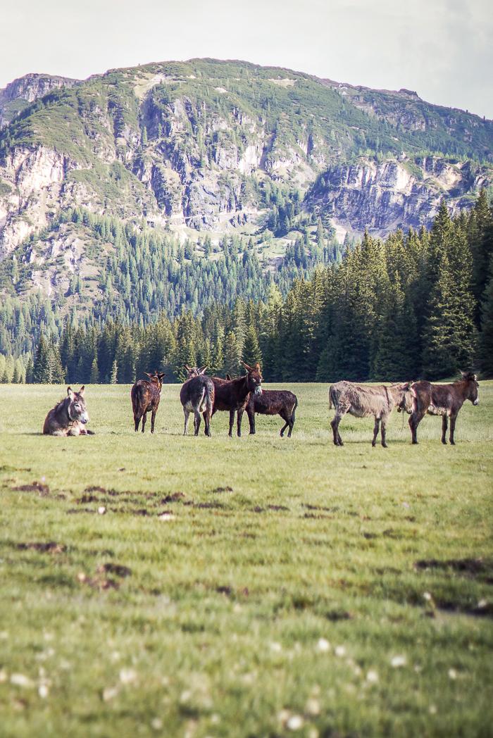 Dolomitenregion Drei Zinnen Natur pur