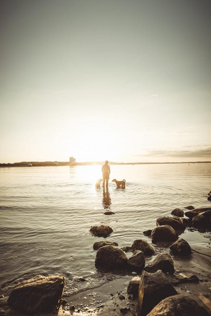 Mann spielt mit Hunden im Wasser