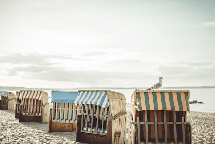 Moewe auf dem Strandkorb