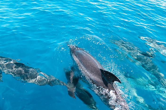 Delfine im offenen Meer