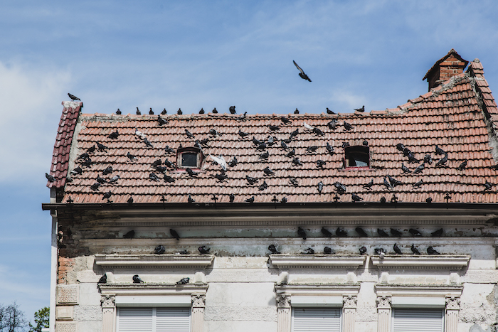 Tauben auf Dach Brasov