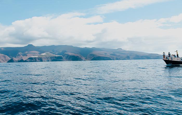 Wale vor La Gomera