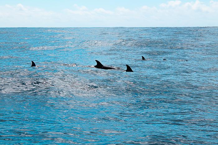Delfine Whale Watching