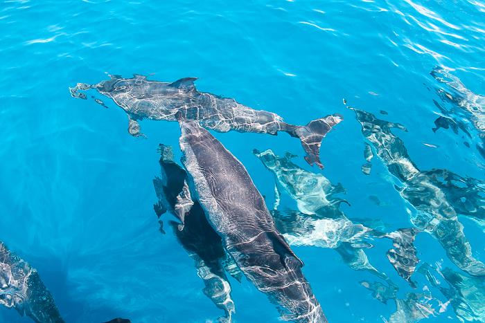 Delfine leben in Schulen