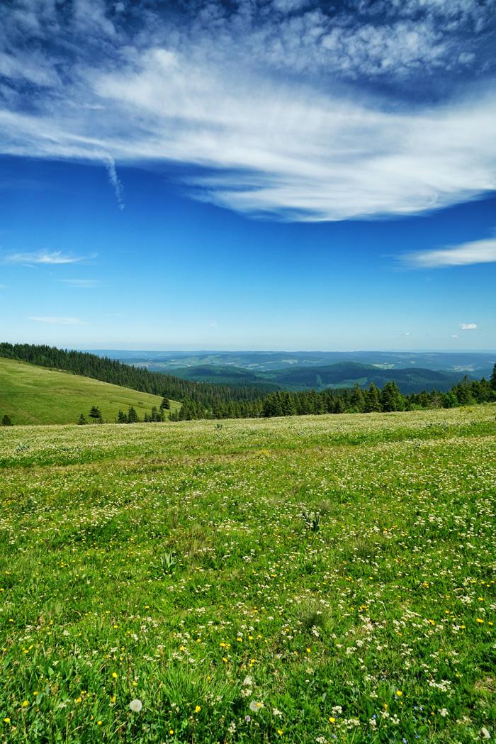 Wiesen und Felder im Hochschwarzwald