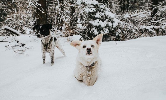 Bergwanderung mit Hunden