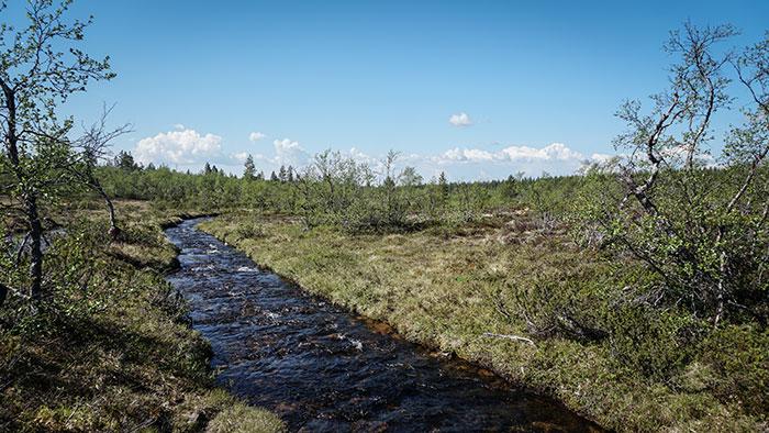 Fluss Wanderung UrhoKekkonen Nationalpark