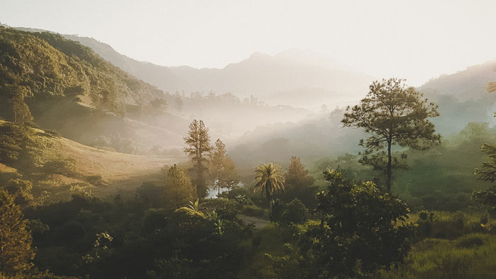 Guatemala Regenwald
