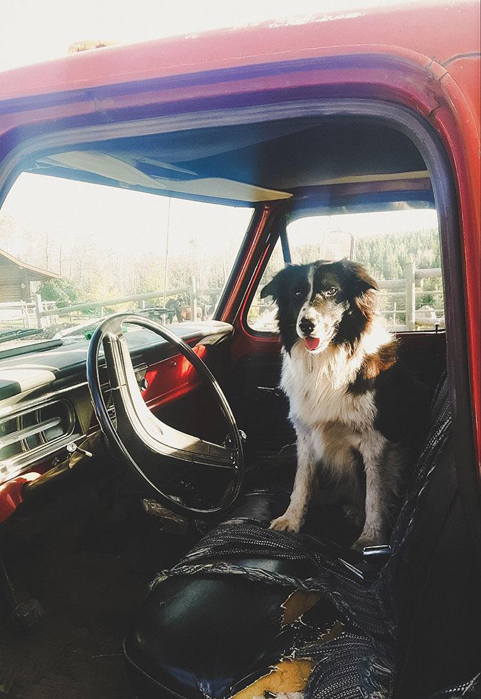 Hund Kanada