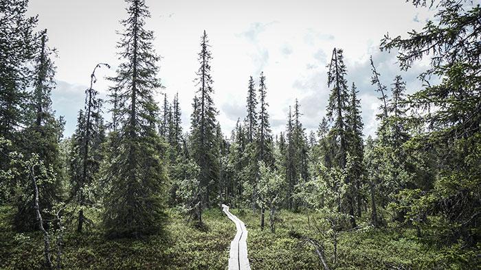 Pyha Nattanen Weg