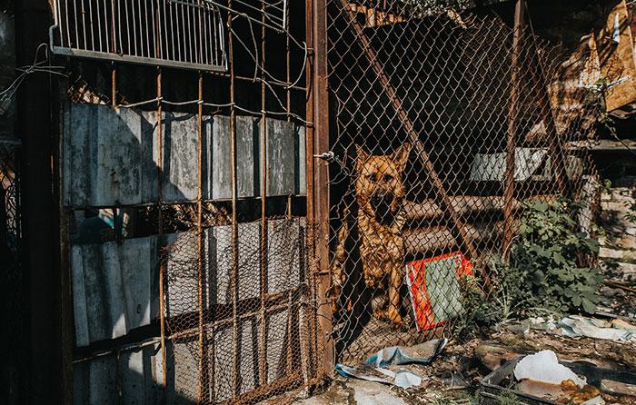 schaeferhund_lisa-(4)