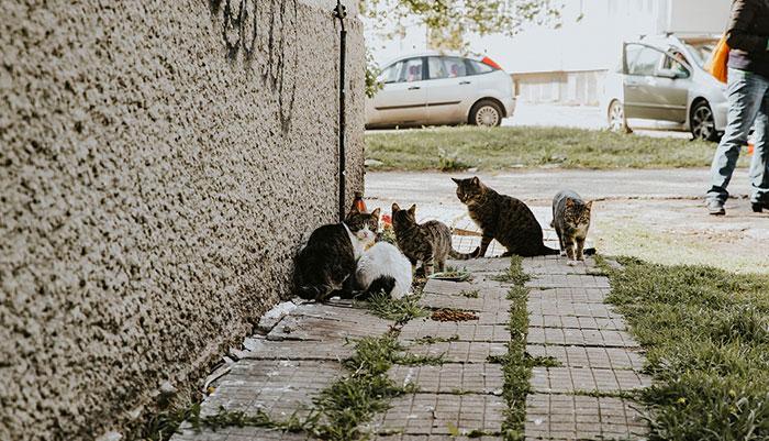 Strassenkatzen Bulgarien