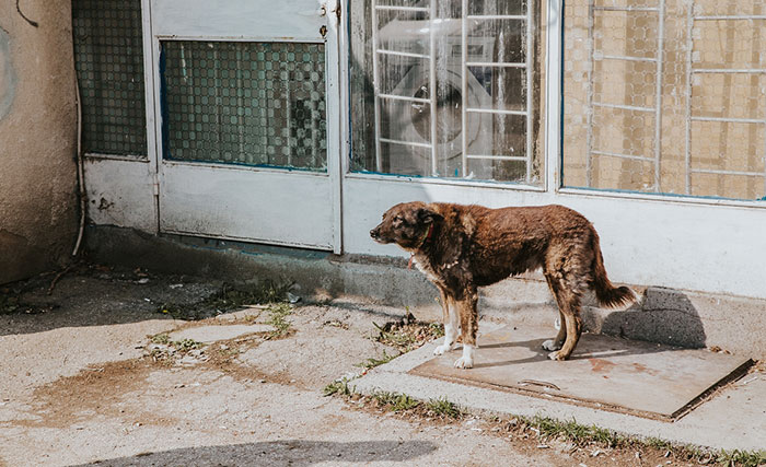 Streuner in Sofia Bulgarien