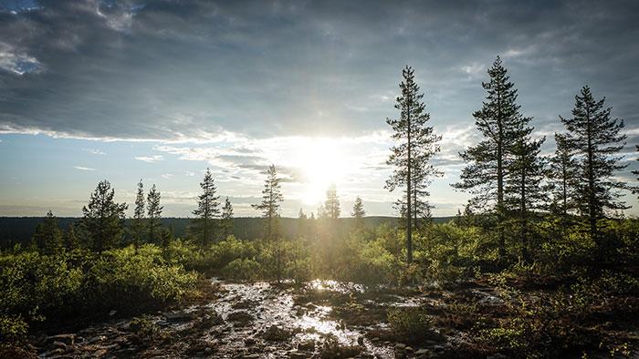 UrhoKekkonen Nationalpark Lappland
