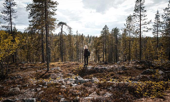Wald Tara