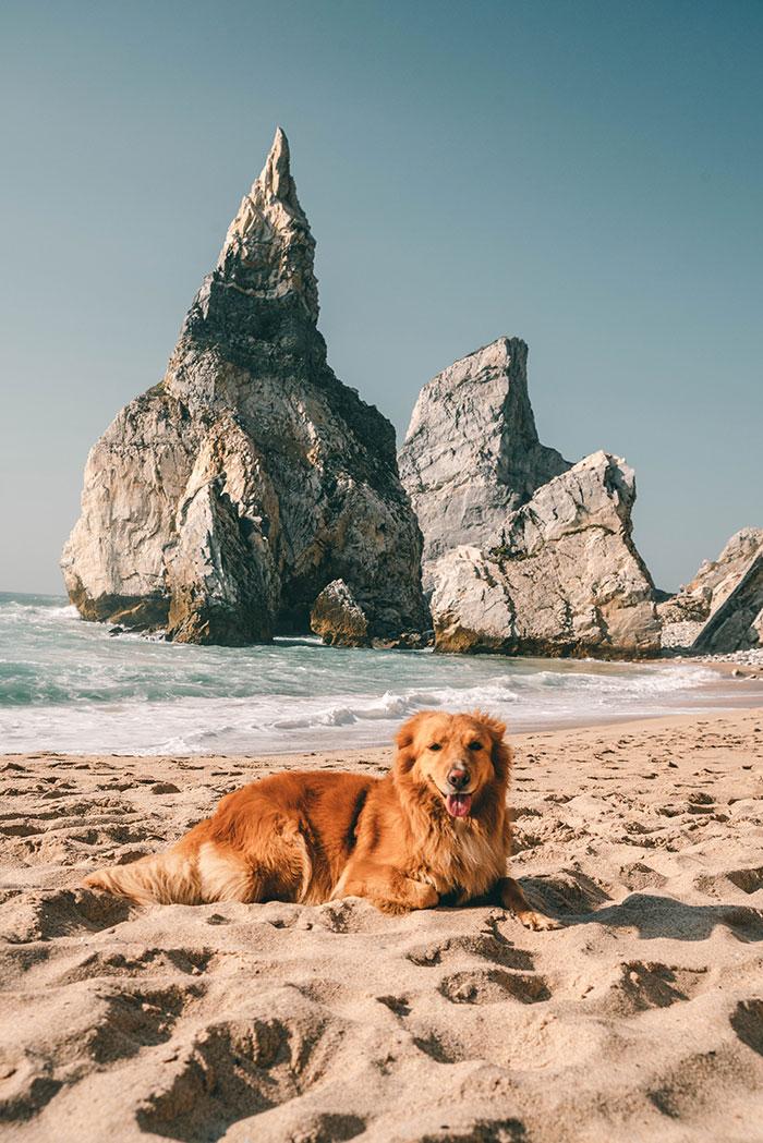 Hundefotos Tipps
