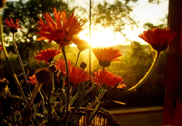 Nachhaltig Reisen mit Good Travel - Re:hof Gartehaus Sonnenuntergang