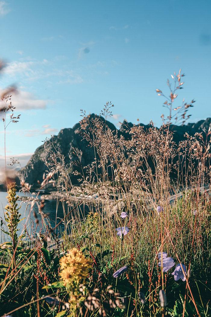 Henningsvear Sommer Norwegen