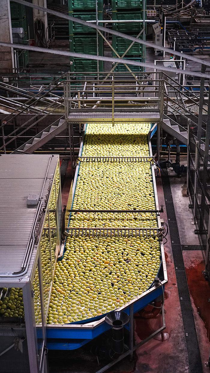 Apfel Genossenschaft Fliessband