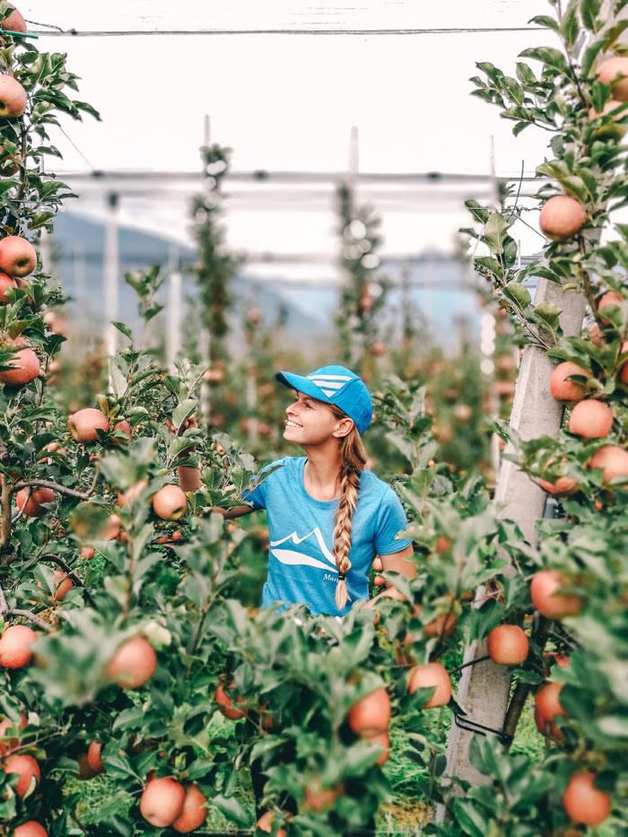 Apfelernte Südtirol