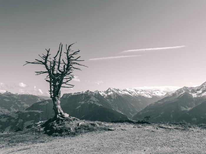 Baum im Tirol