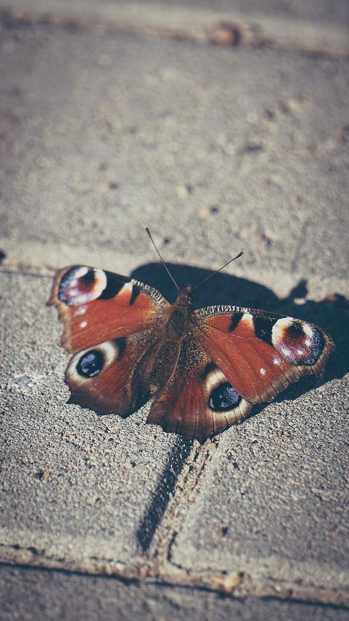 Fischerdorf Schmetterling