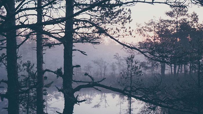 Nebliger Wald Viru