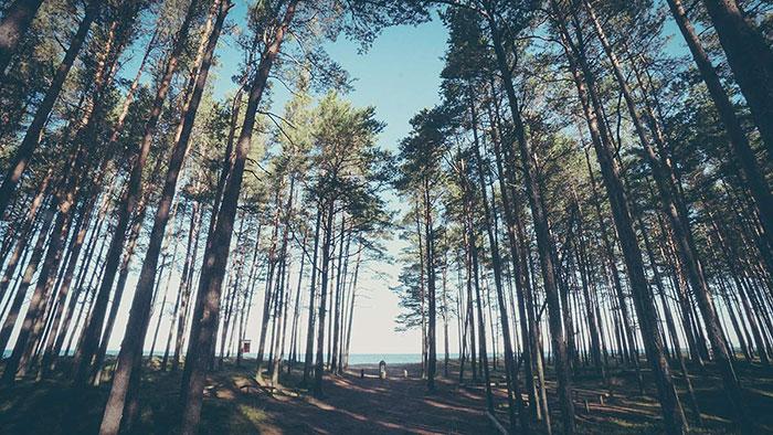 Strandweg Estland