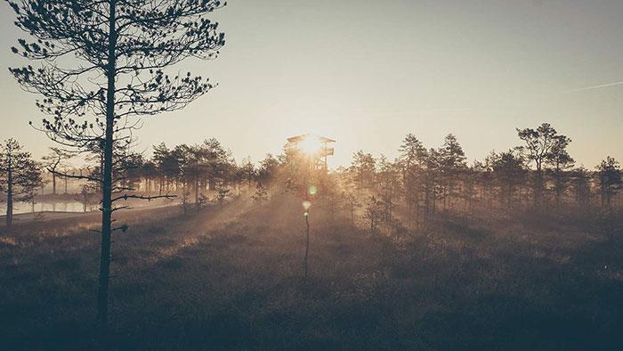 Viru Sonnenaufgang